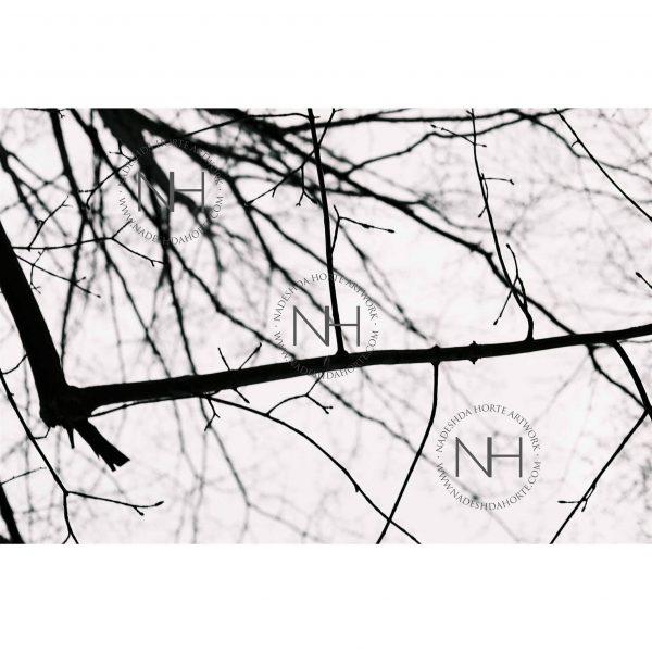 Stille, Ast, Analoge Fotografie, SW, Bäume, Wald, Nadeshda Horte
