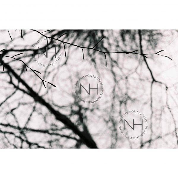 Stille, Blick nach oben, Schwarz Weiß Fotografie, Nadeshda Horte