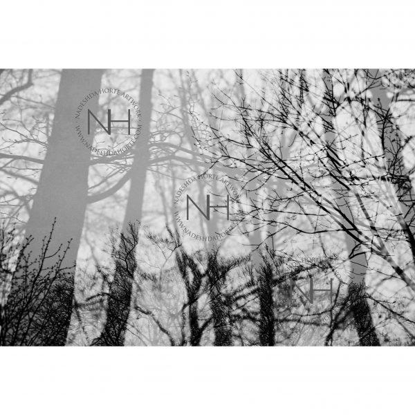 Stille, Entspannen, Fotografie, Analogfotografie, Nadeshda Horte