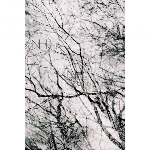 Stille, Entspannung, Analogfotografie, SW Fotografie, Nadeshda Horte