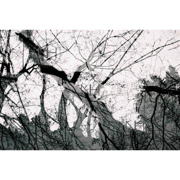 Stille, Fantasiewald, SW Fotografie, Analogfotografie, Nadeshda Horte