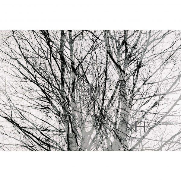 Stille, Fotografie, Schwarz Weiß, Analogfotografie, Nadeshda Horte