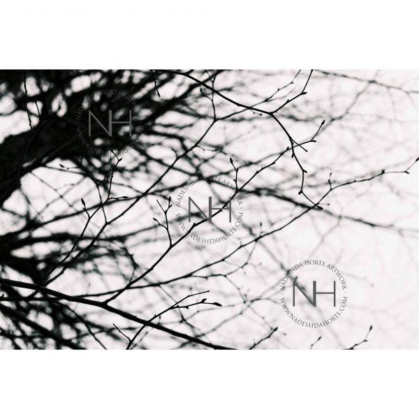 Stille, Schwarz Weiß Fotografie, Analogfotografie, Nadeshda Horte