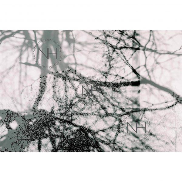 Stille, Spaziergang, Schwarz Weiß Fotografie, Poster, Nadeshda Horte