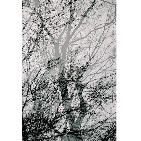 Stille, Waldspaziergang, Schwarz Weiß Fotografie, Nadeshda Horte