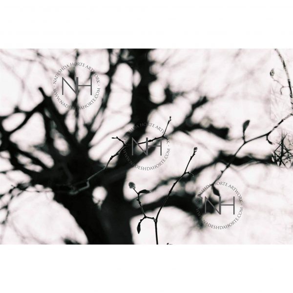 Stille, Wohlbefinden, Bäume, Äste, Kunstdruck, Nadeshda Horte