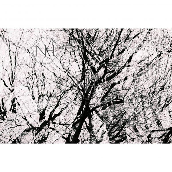 Stille, Äste, Analogfotografie, SW Fotografie, Nadeshda Horte